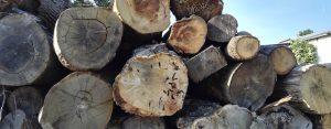 Sustainability oak log stack