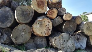 Sustainability oak trees at the wood yard