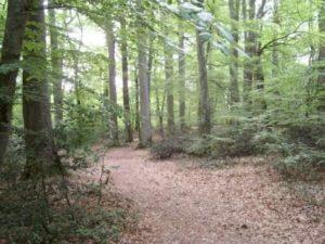 Troncais Forest France
