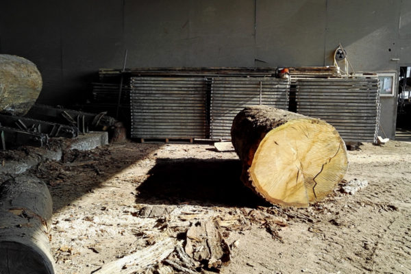 Oak tree trunk at Marans scierie before being cut into planks